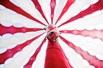 Imperial Japanese Flag