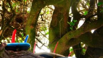 treeboards1