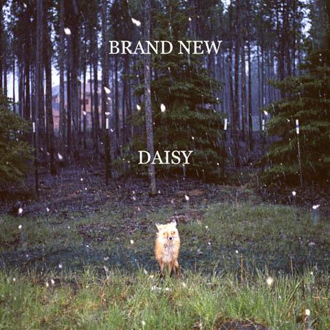 Brand New Daisy