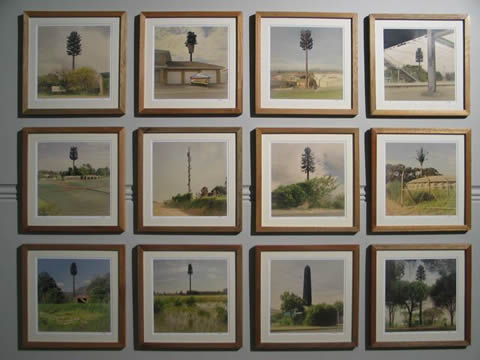 Dillon Marsh, Invasive Species, photo prints, 40 x 40cm each