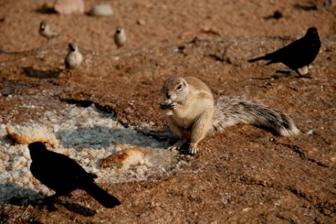 Don't Feed the Ground Squirrel