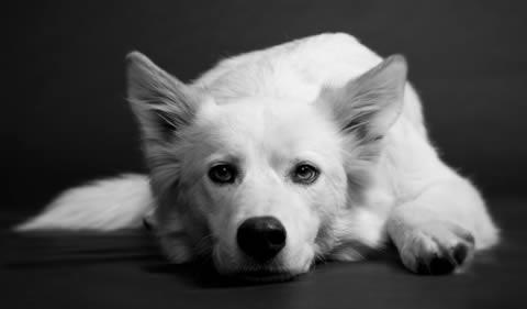 Doggone Snowblindness