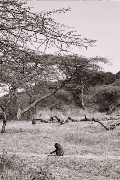 Last Sunday Ethiopia