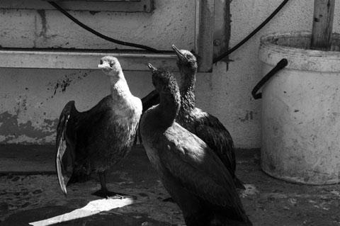 Hout Bay - Birds