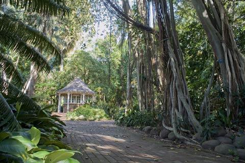 Durban's Poison - Bot Gardens
