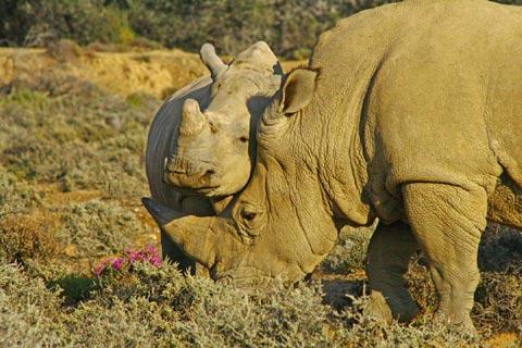 Freebie - Rhino Protect