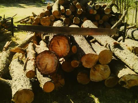 The Lumberjack Festival