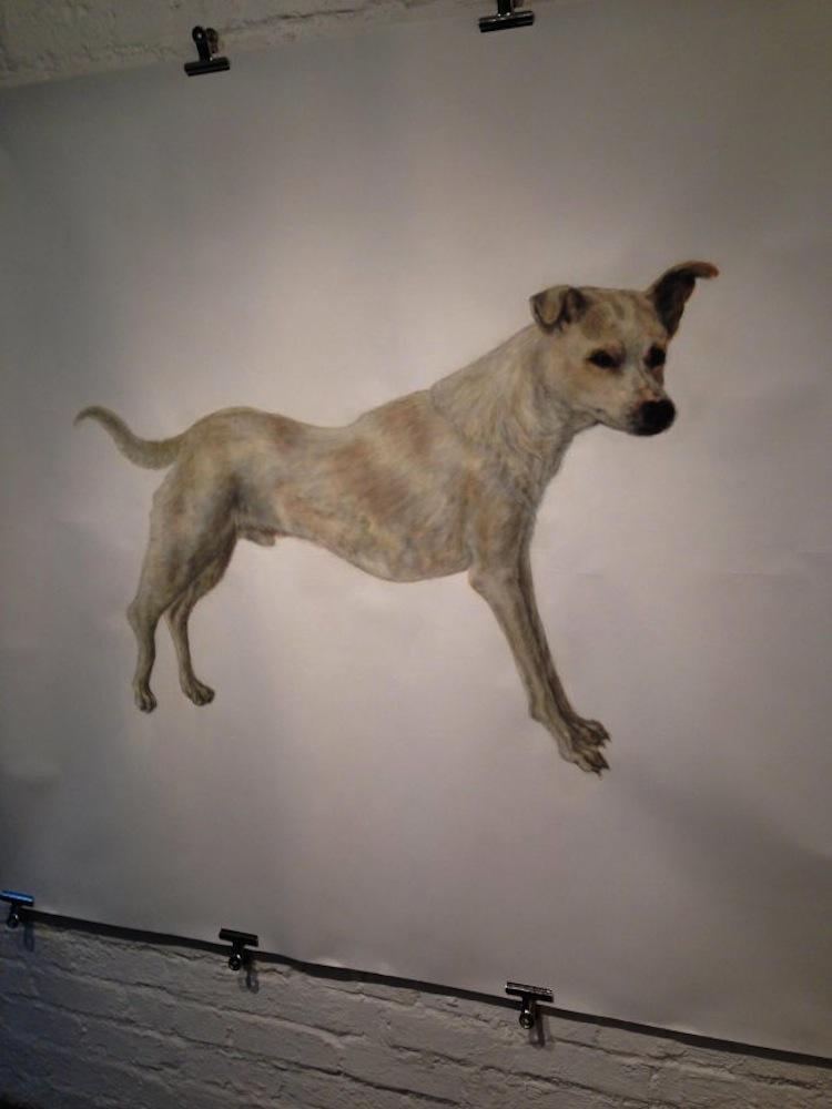 Zoo Dog